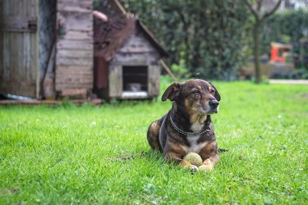彼のテニスボールで休んでいる犬が庭で見つかった