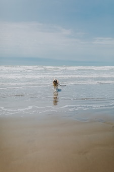 Dog running around the sea surrounded by the beach under a cloudy sky