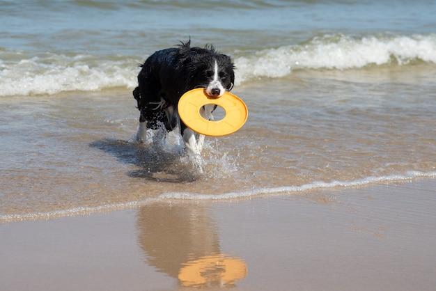 Собака бежит за игрушкой в море