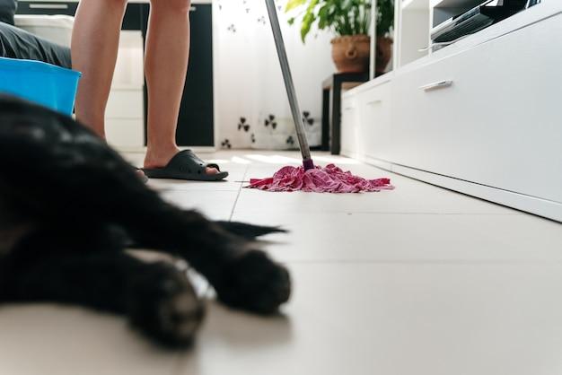 女性が後ろにモップで居間を掃除している間、前景に犬の足。