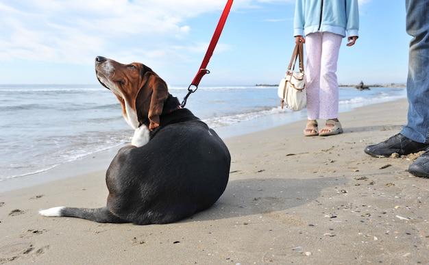 해변에서 긁는 개