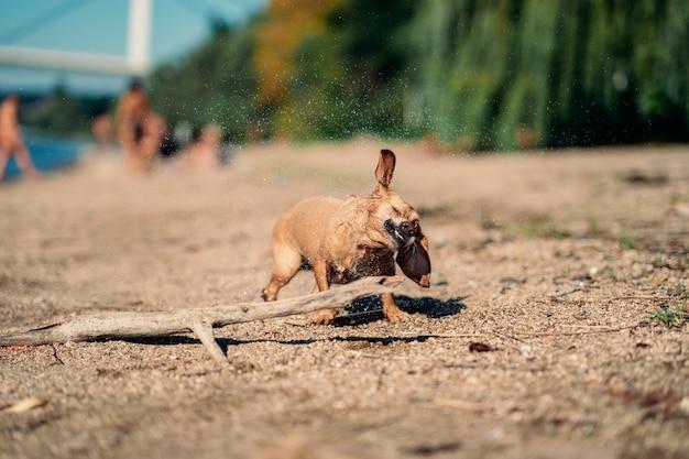 Dog shaking off water