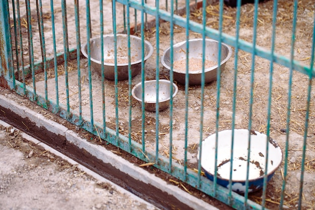 Dog shelter. half empty bowls with dog food.
