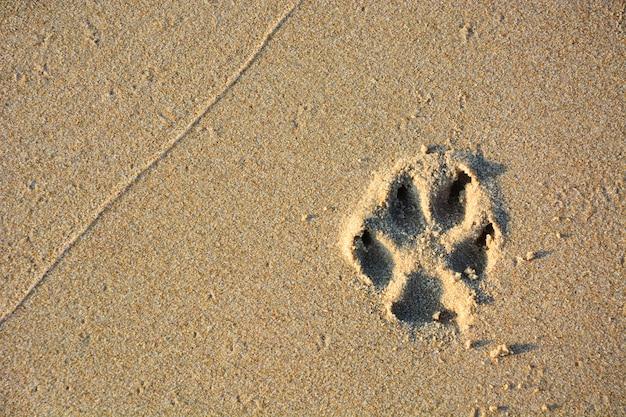 Dog single paw print on beach sand, copy space