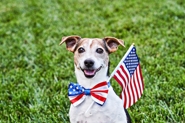 Dog sits in american flag bow tie with usa flag on green grass. celebration of independence day, 4th july, memorial day, american flag day, labor day party event