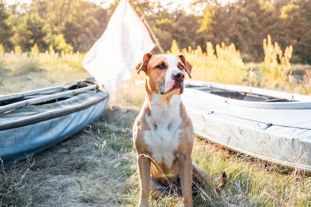 A dog sits in front of canoe boats in beautiful evening light.