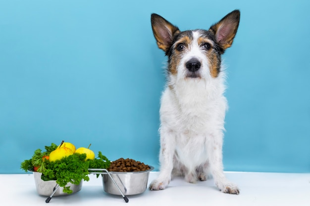 Dog sits at his bowl with dry food, correct and balanced nutrition for the pet.