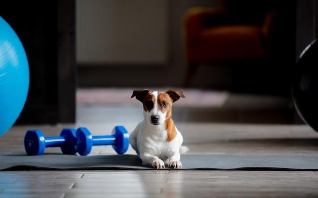 Собака сидит на поверхности для занятий спортом дома