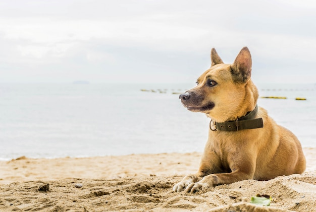 Dog sitting on beach with copy space
