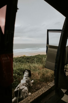 Dog sitting by a car looking at the ocean