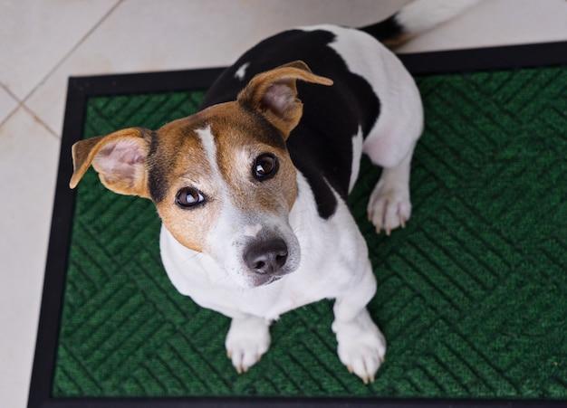 Dog sitting on door mat