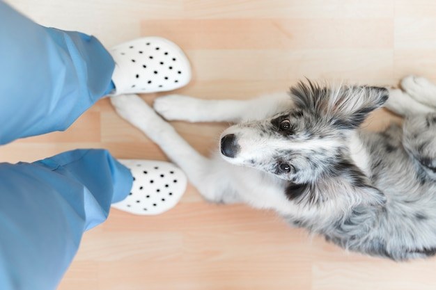 Dog sitting under the female veterinarian's feet on hardwood floor