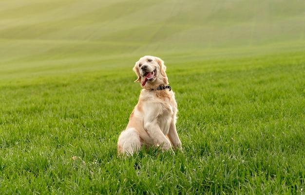 Dog sitting in green grass