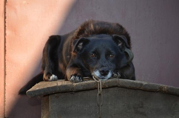 通りのブースに座っている犬
