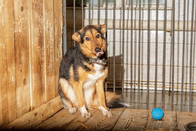 動物保護施設のケージに座っている犬