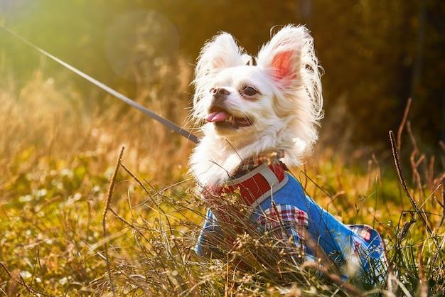 秋の晴れた日に草の中に座っている犬