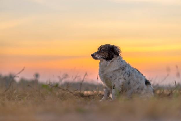 The dog sitting on meadow in beautiful sunset background.