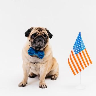 Собака сидит на полу в день независимости