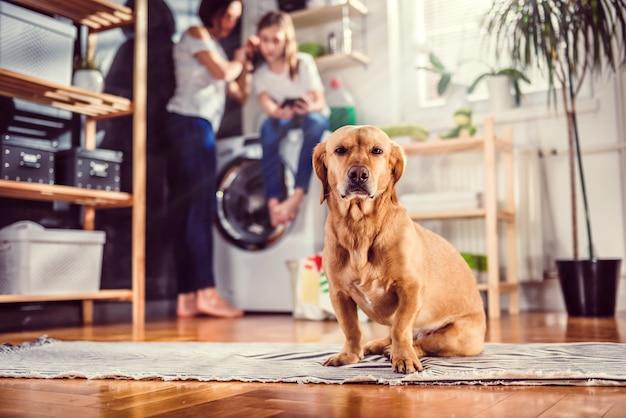 ランドリールームの床に座っている犬