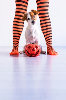 Собака сидит на полу с тыквой, кроме того и ее хозяин. женщина носить черные и оранжевые колготки. концепция хэллоуин образ жизни в помещении