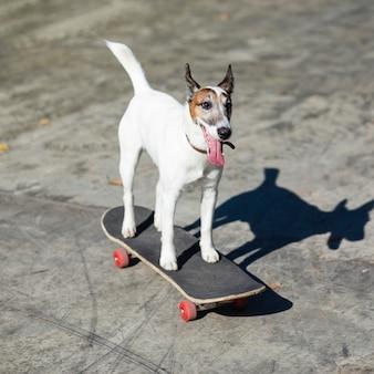 Dog sitting on skateboard in park