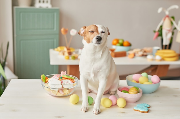 Dog sitting on a table with painted eggs and food