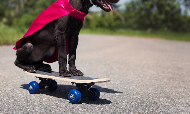 Dog skateboard street canine costume pet