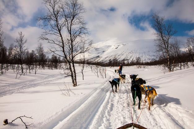 Dog sledding in lofoten islands, northern norway.