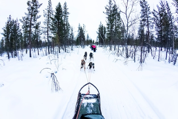Dog sledding with huskies in beautiful landscape