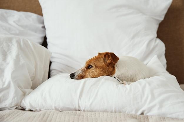 침대에서 자고 쉬고 있는 개