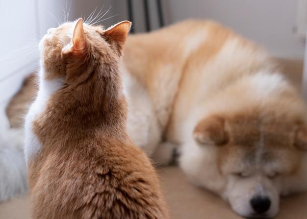 床で寝ている犬と猫