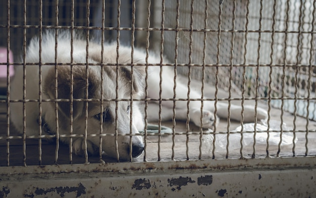 A dog sleeps in a cage and feeling lonely.