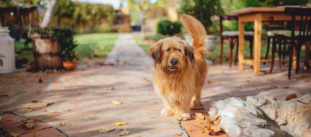裏庭のパティオに立っている犬