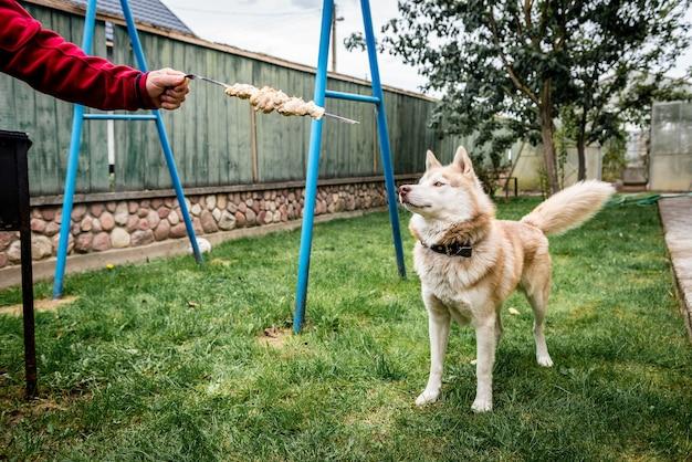 バーベキューの近くに立って飼い主を見上げている犬。