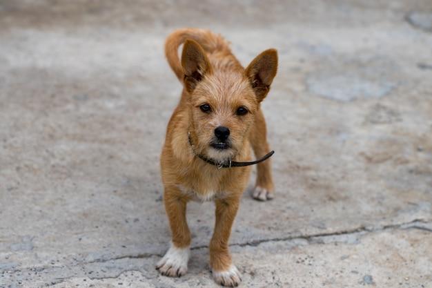 Собака стоит на улице