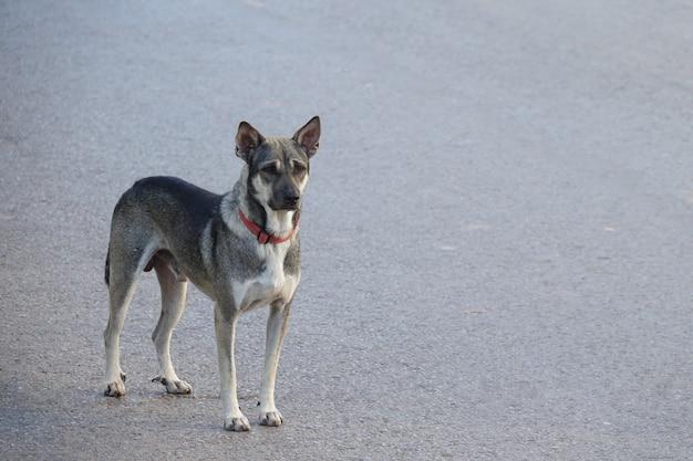 道路に立っている犬