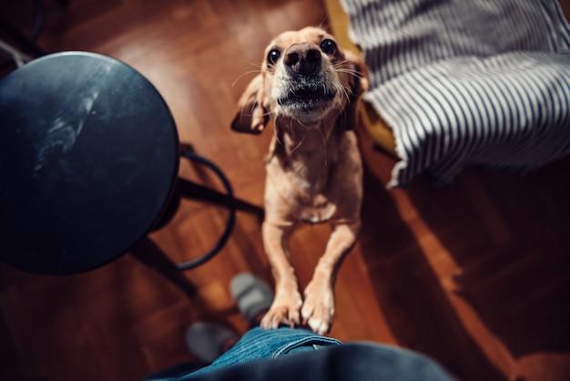 Собака стоит на задних лапах и лает