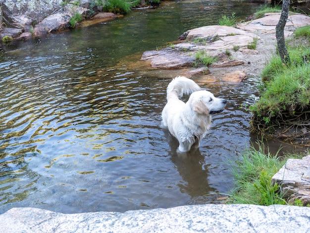 ラグーンの端に立っている犬が片側を向いています。晴れた日に不思議なことに横を向いている川の水に立っている陽気な犬。