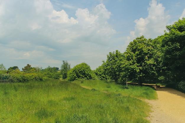 Собака стоит на дороге в загородном парке лодмур, уэймут, дорсет летом