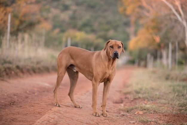 Собака стоит на дороге