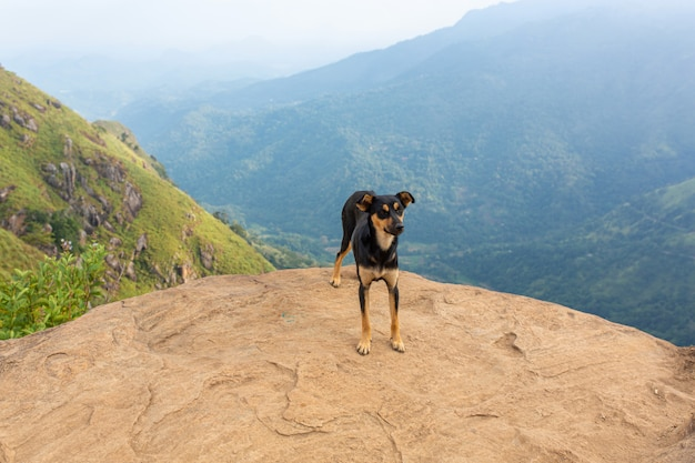 A dog stands on the edge of a cliff in the mountains