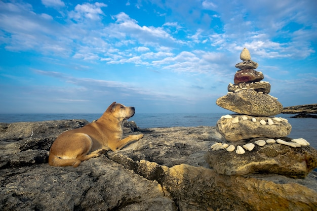 Dog on a stone by the sea shore