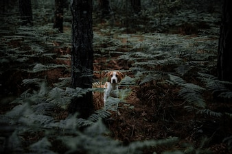 Dog surrounded by ferns standing in dense forest