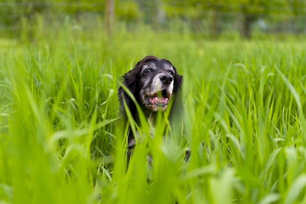 Собака в окружении зеленой травы парка