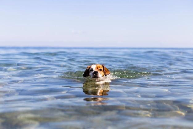 海で泳いでいる犬。夏の時間と休暇