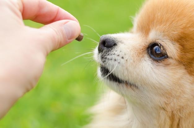 Dog training on green