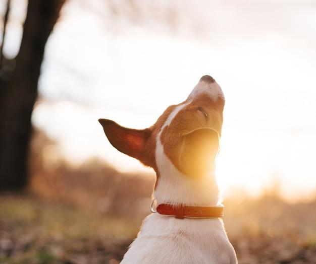 自然の中の犬の訓練