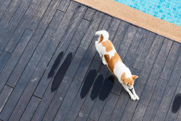 プールサイドでねじれる犬