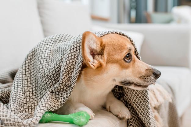 Собака под одеялом со своей игрушкой