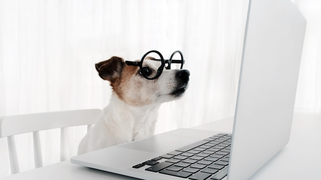 괴상한 안경 노트북 키보드에서 컴퓨터를 사용하는 개